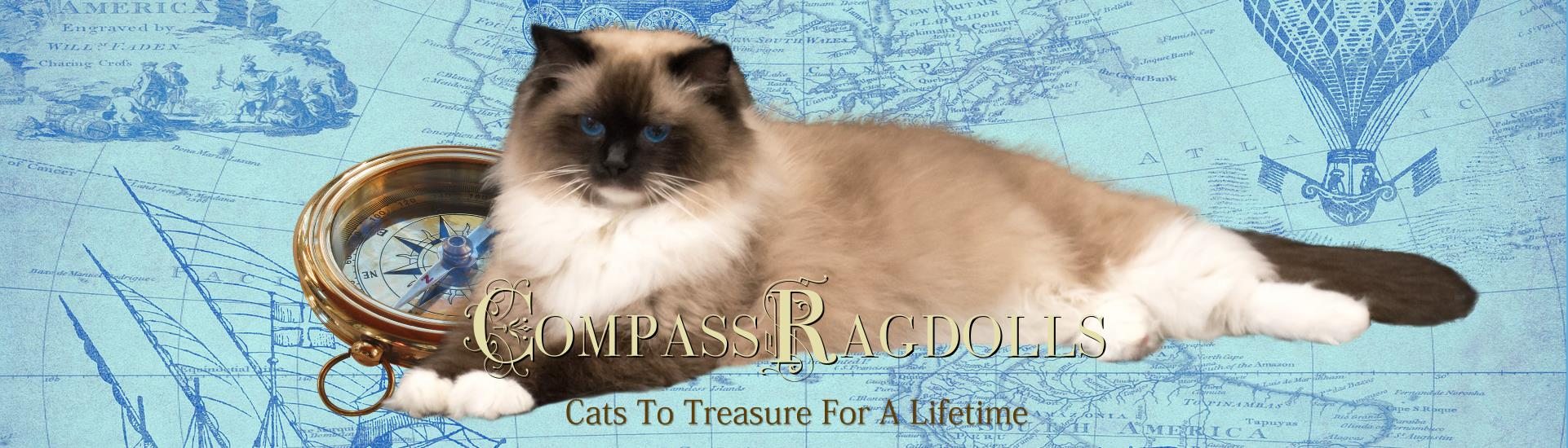 Available Ragdoll Kittens for Sale FL | Compass Ragdolls